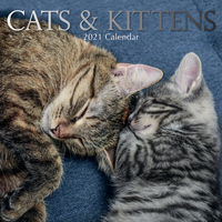 Cats & Kittens - 2021 Square Wall Calendar 16 month by Gifted Stationery (P)