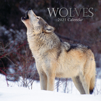 Wolves - 2021 Square Wall Calendar 16 month by Gifted Stationery (AC)
