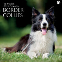 Border Collies - 2021 Square Wall Calendar 16 month by Gifted Stationery (S)