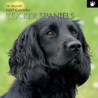 Cocker Spaniels - 2021 Square Wall Calendar 16 month by Gifted Stationery (E)