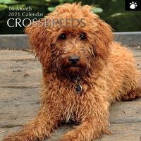Crossbreeds - 2021 Square Wall Calendar 16 month by Gifted Stationery (D)