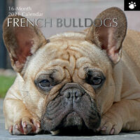 French Bulldogs - 2021 Square Wall Calendar 16 month by Gifted Stationery (0)