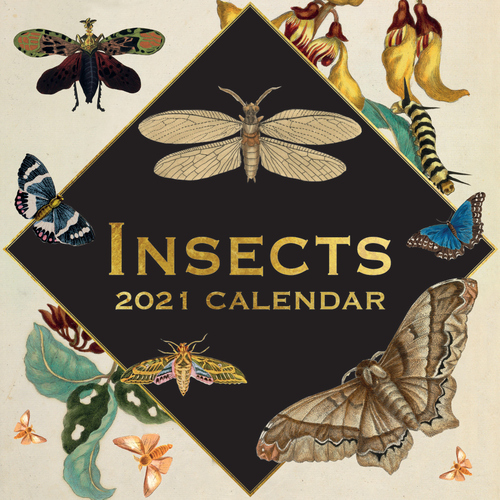 Insects - 2021 Square Wall Calendar 16 month by Gifted Stationery (D)